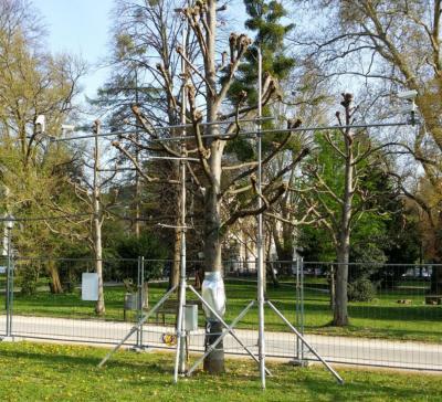 364x400-figure3-arbre