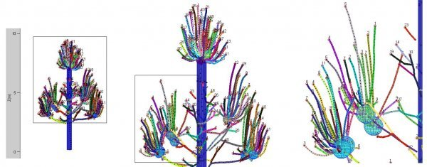 figure18_capture_arbre_pousses-squelette1